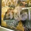 Lámina antigraffiti exterior (125 µ) transparente e incolora para ventanas 4 X CG